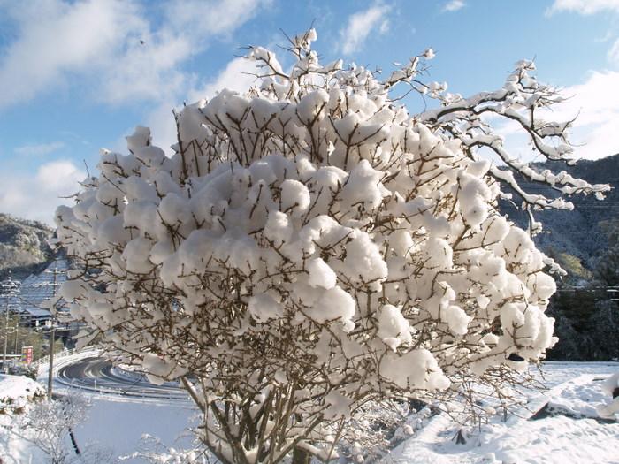 今朝も雪景色_c0116915_22593123.jpg