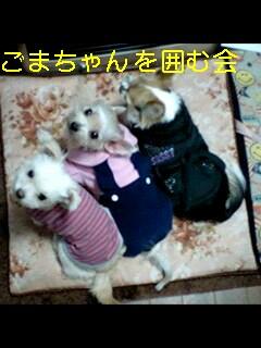 e0079125_20111832.jpg