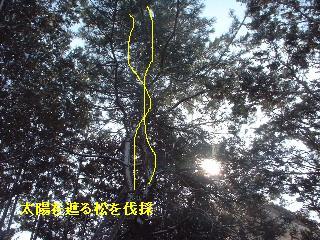 f0031037_20421753.jpg