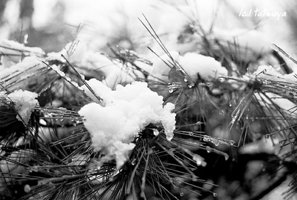 Feb  13  (wed)  雪が降る 1_f0139991_2151177.jpg