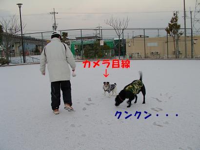a0075993_1456564.jpg
