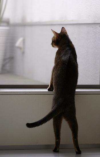 [猫的]もどき_e0090124_8195718.jpg