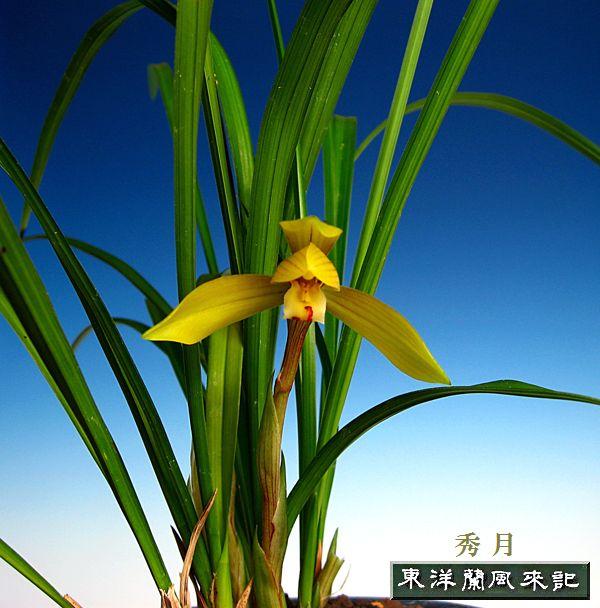 ◆平成20年春の展示会のご案内           No.142_b0034163_19482589.jpg