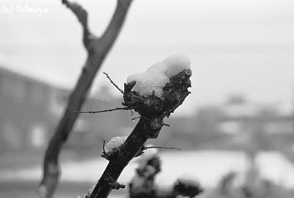 Feb  14  (thu)   雪が降る 2_f0139991_22111344.jpg