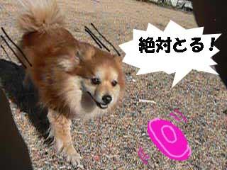 c0128896_0451238.jpg