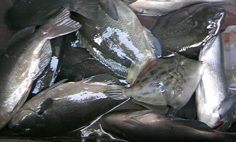 14日ホト回りの釣果…ミズタマリで名釣会西森さん貫禄の・・・?_d0114397_1620956.jpg