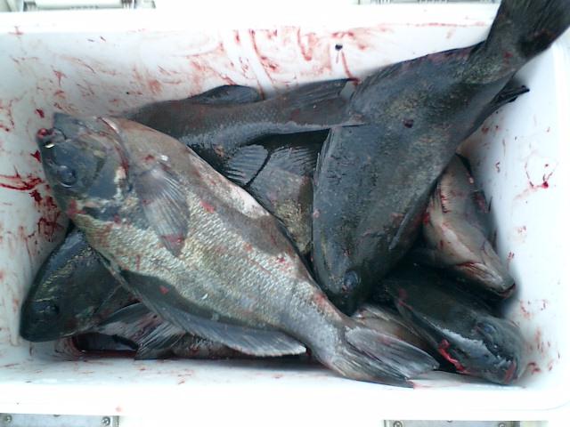 14日ホト回りの釣果…ミズタマリで名釣会西森さん貫禄の・・・?_d0114397_2040179.jpg