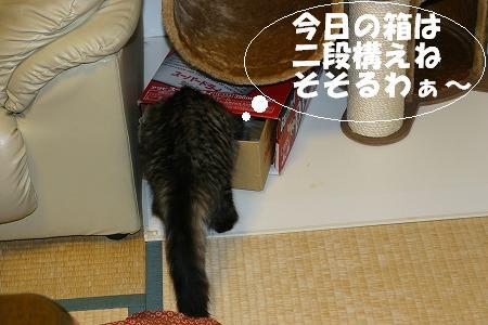 f0141800_134004.jpg