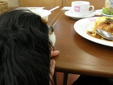ニコとランチを食べに~♪_c0145250_1119274.jpg