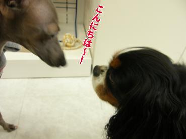 ニコとランチを食べに~♪_c0145250_1164778.jpg