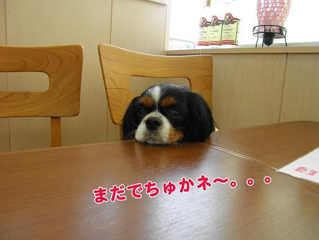 ニコとランチを食べに~♪_c0145250_1192215.jpg