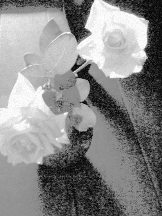 バラ二輪 ♯2_e0003966_1591014.jpg