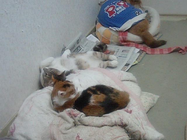 シルフィにベッド取られた_b0112380_20391884.jpg