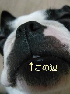 e0110089_2012123.jpg