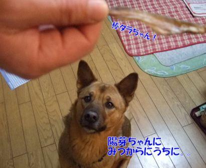 b0087400_044123.jpg