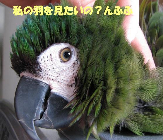 d0081210_1858662.jpg