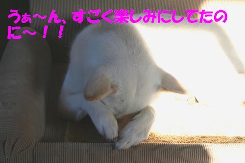 f0121712_16593327.jpg