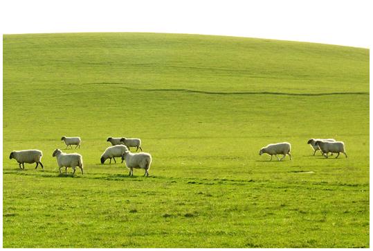 Lambing Season Soon!_f0081218_713224.jpg