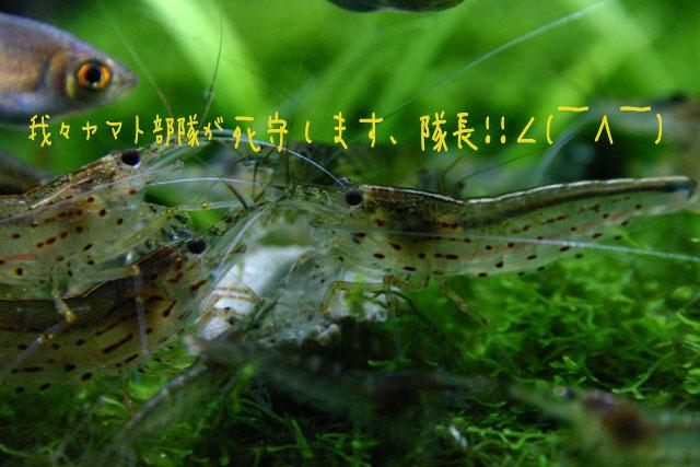 c0101419_1813681.jpg