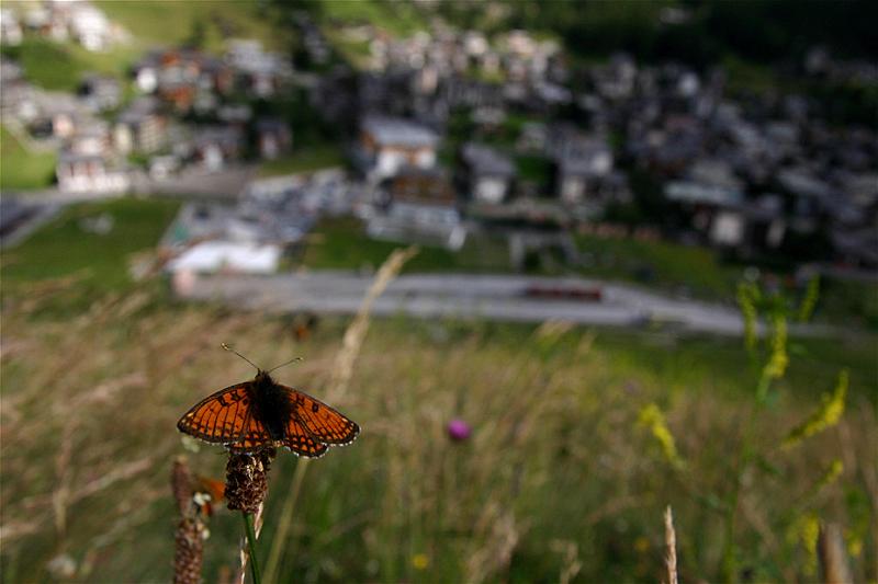 スイスの花と蝶2007(5) ゴルナーグラート展望台②_d0054625_23232786.jpg