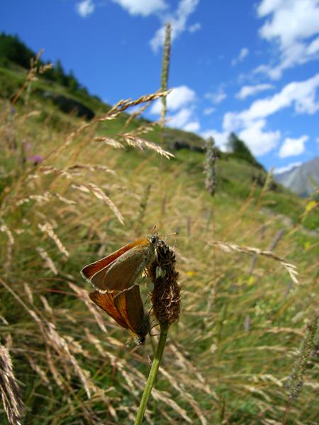 スイスの花と蝶2007(5) ゴルナーグラート展望台②_d0054625_23292962.jpg