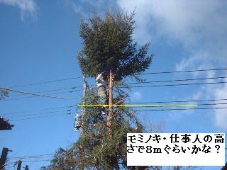 伐採・剪定完了_f0031037_1833088.jpg