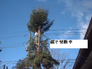 伐採・剪定完了_f0031037_18332512.jpg