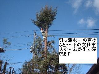 伐採・剪定完了_f0031037_18333718.jpg