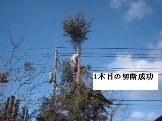 伐採・剪定完了_f0031037_1833501.jpg