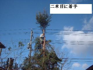 伐採・剪定完了_f0031037_1834312.jpg