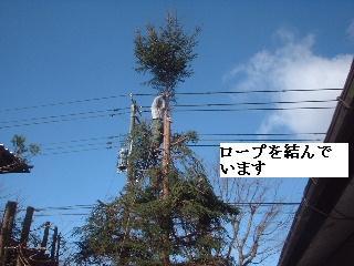 伐採・剪定完了_f0031037_18345583.jpg