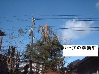 伐採・剪定完了_f0031037_18352038.jpg