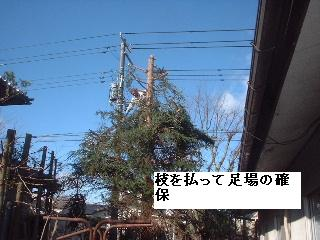 伐採・剪定完了_f0031037_1835353.jpg