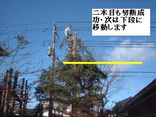 伐採・剪定完了_f0031037_1835850.jpg