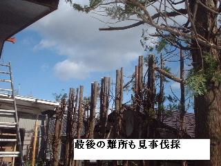 伐採・剪定完了_f0031037_18361822.jpg