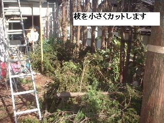 伐採・剪定完了_f0031037_18363240.jpg