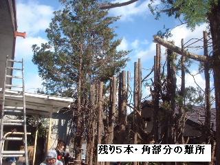 伐採・剪定完了_f0031037_1836476.jpg