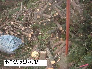 伐採・剪定完了_f0031037_18364774.jpg