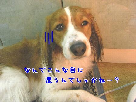 d0013149_9252992.jpg