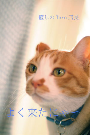 b0096474_20105829.jpg