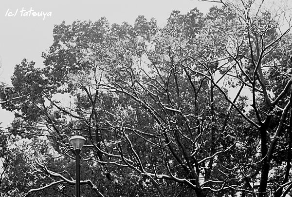Feb  16  (sat)   雪が降る 3_f0139991_2146536.jpg