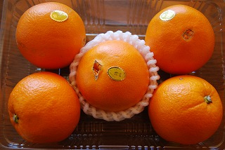 オレンジマーマレードを作る_c0124100_1216404.jpg