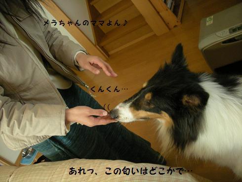 f0081100_025738.jpg
