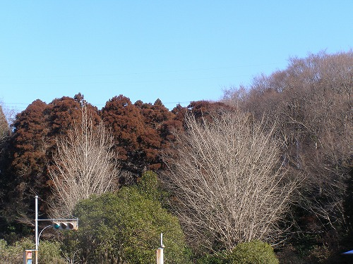 春が待たれる公園風景_d0147812_12593245.jpg