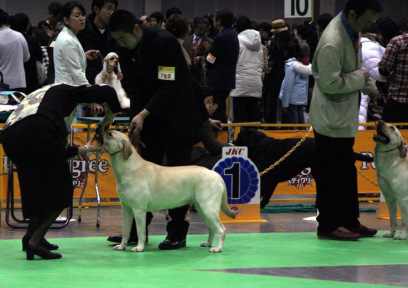 FCI神奈川インターナショナルドック゜ショー_d0151813_2192970.jpg