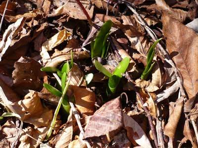 春よ来い_d0127634_1220848.jpg