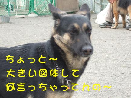 e0060693_2315132.jpg