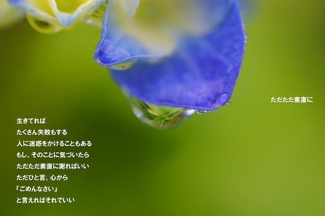 c0112724_1937623.jpg