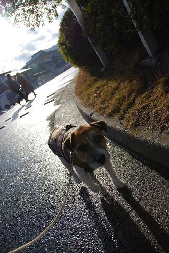 ある日の散歩_c0099133_2432034.jpg
