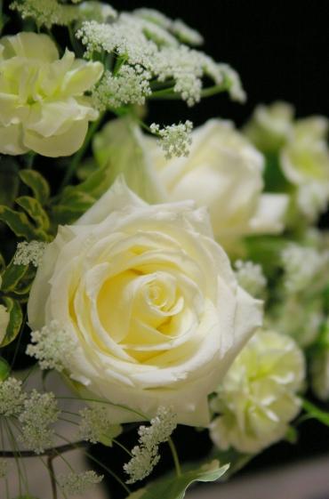 白いバラ ブルゴーニュ_d0145934_2059267.jpg